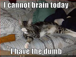 cant brain