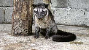 The civet cat secretes an unpleasant fecal odor, but in the right proportion transforms perfume into an aphrodisiac. So far efforts at crossbreeding the civet with the Tea Partiers has been unsuccessful. Evolution is a cruel mistress.