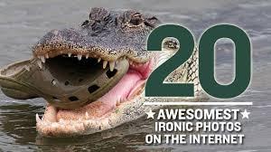 Croc eating a croc
