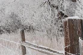Frost-fence