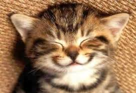 Happy kitten interlude...just because I thought it was cute...