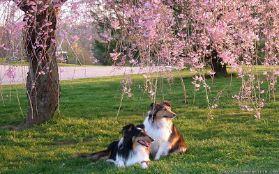 two dogs spring