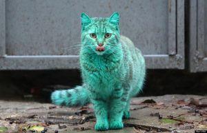 Bright green stray cat on streets of Varna, Bulgaria - 04 Dec 2014