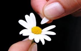 Daisy Plucking