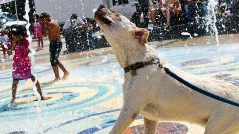 dog cooling off