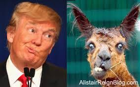 Trump and Kangaroo