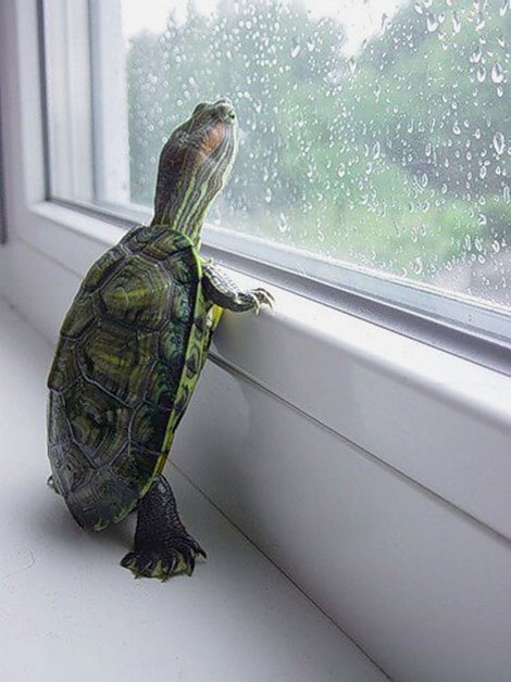 Turtle Window