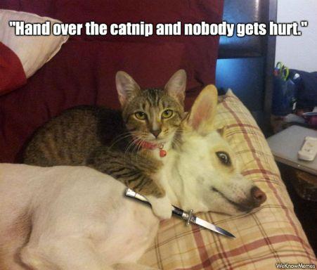 Hand-over-the-catnip-and-nobody-gets-hurt.jpg
